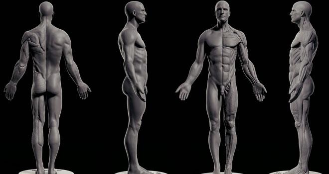 Male Anatomy Free Download By Reza Abedi Zbrushtuts