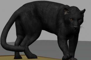 Panther-Animation-by-ChunYong-Chong