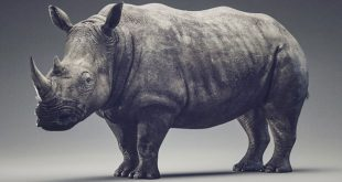 Rhino Sculpt Timelapse by Dmytro Teslenko